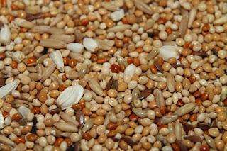 Apa itu Protein Hewani dan Protein Nabati