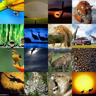 Gambar Flora dan Fauna Indonesia di Jawa Macam Jenis Hewan Tumbuhan Nusantara