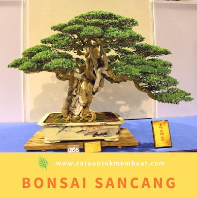 Bonsai Sancang