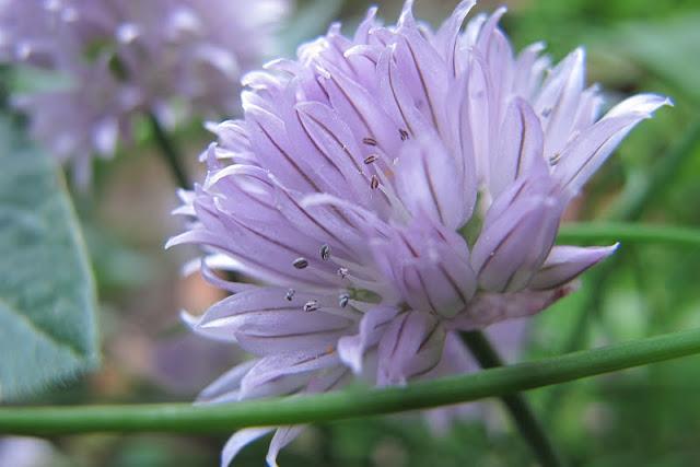 de 30 mooiste foto's uit mijn tuin van mei 2012