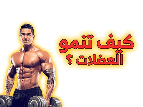 كيف تنمو العضلات ؟