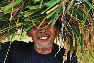 petani, perjuangan petani, pendapatan petani