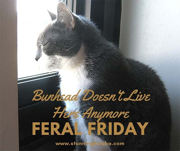 Feral Friday Gossip: Bunhead Doesn't Live Here Anymore