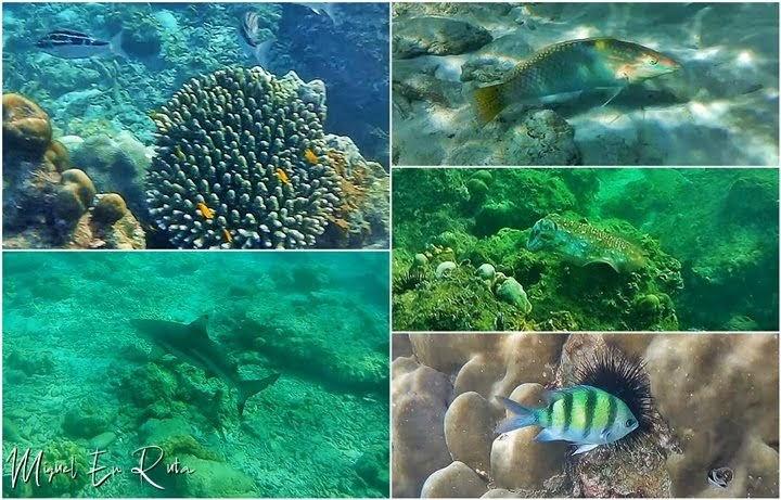 Snorkel-Islas-Phi-Phi