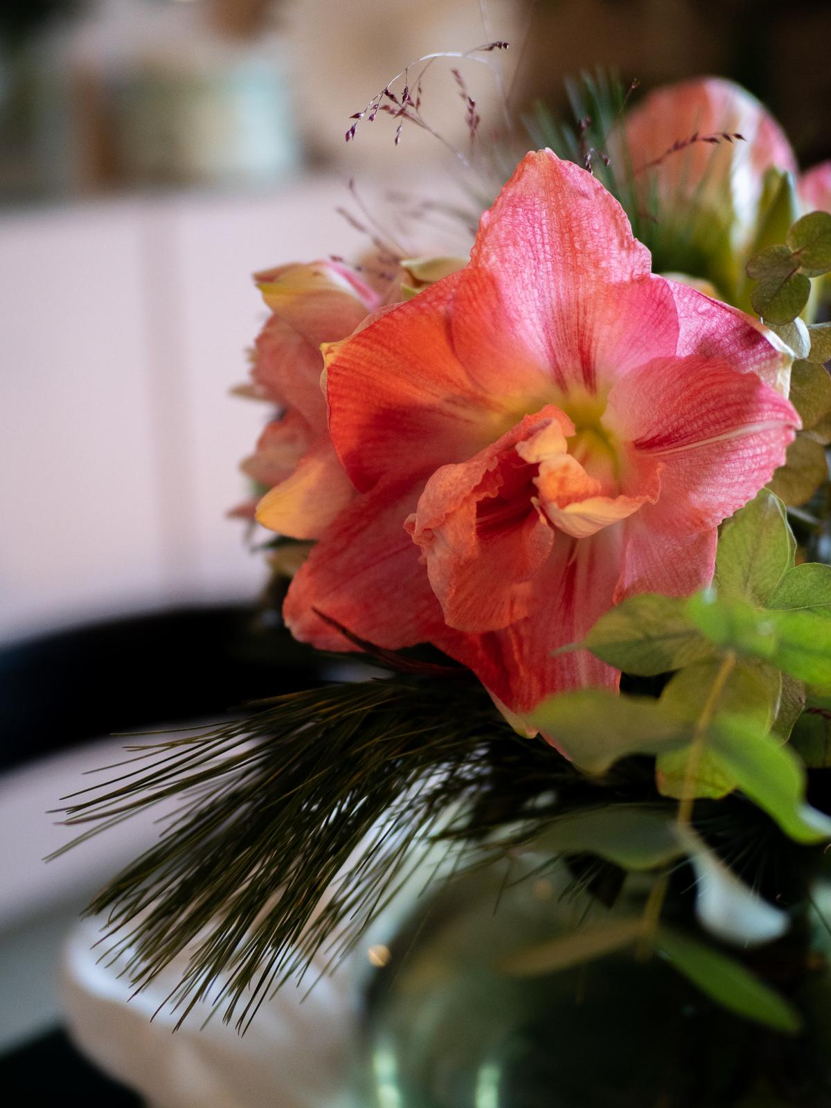 vaaleanpunainen amaryllis