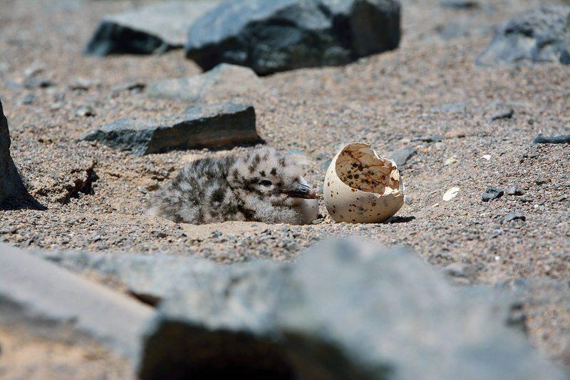 Breve muestra del tremendo material que trae el Atlas de aves chilenas