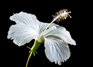 Bagian Bagian Bunga Beserta Fungsi Dan Gambarnya Materi Belajar