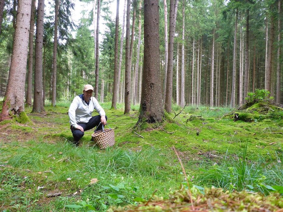 Я, лес, корзинка
