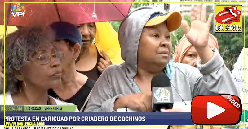 Vecinos de Caricuao denunciaron que los colectivos quieren construir un criadero de cochinos