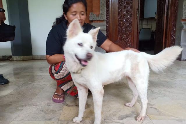 Carcan Asu (cicing) mengenali karakter anjing Bali