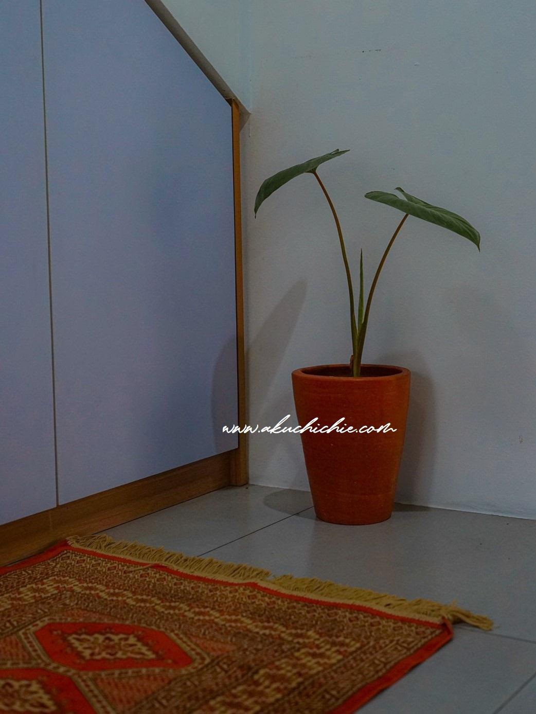 tren tanaman hias