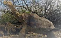 Carbonemys Jenis Hewan Besar yang Menakutkan Hidup di Zaman Pra-sejarah