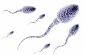 sperm hücreleri
