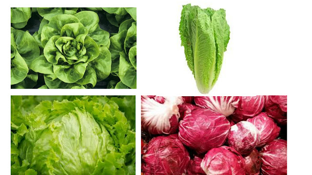 types of lettuce explained in details. (with comparison)