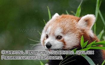 Omnivora, Herbivora, Karnivora  adalah : Pengertian dan Contohnya