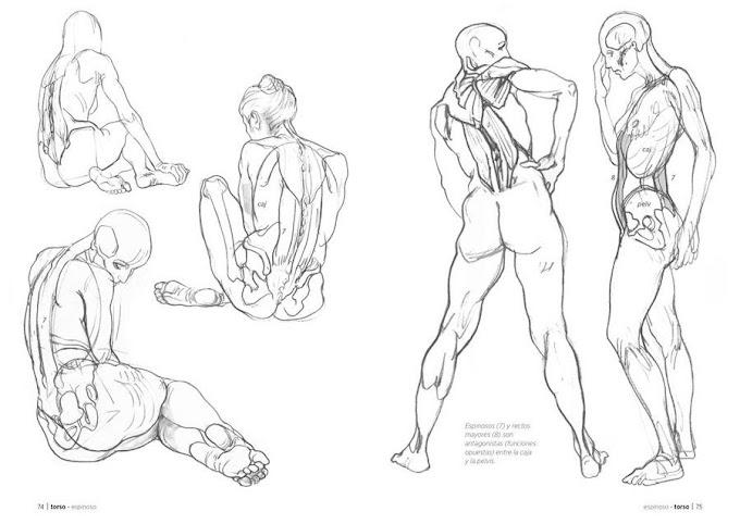 Anatomía artística - Dibujo