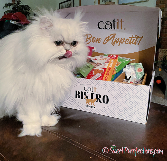 silver shaded Persian cat, Brulee, with tongue out for the deliciousness of Catit food