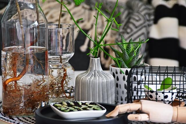 interior | wohnen mit pflanzen - sukkulenten ableger selber ziehen | luziapimpinella.com for #urbanjunglebloggers