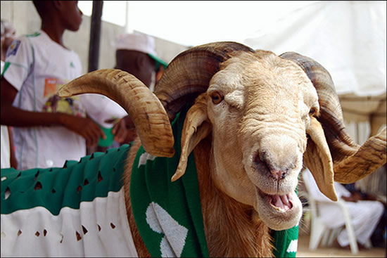 Federal government declares 2 days public holiday for Sallah