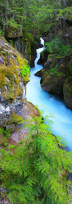 Avalanche Gorge at Glacier National Park in northwestern Montana