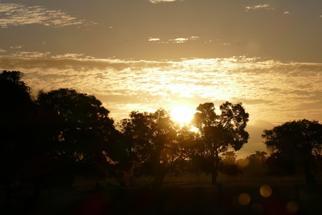 Baumsilhouetten, Australien, tipp, empfehlung, fotografieren, silhouetten