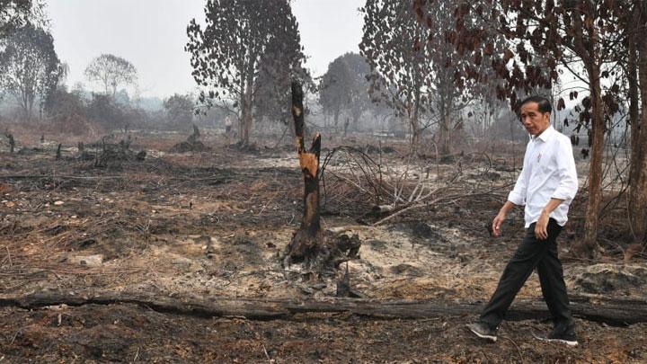 Letak Kesalahan Jokowi Saat Tinjau Lokasi Kebakaran Hutan di Riau