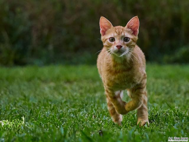 Ginger Running