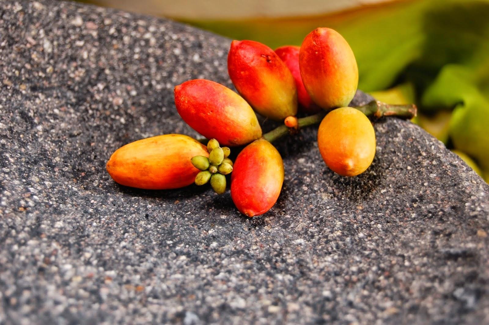 Health Benefits of Melinjo Leaves and Melinjo Seeds