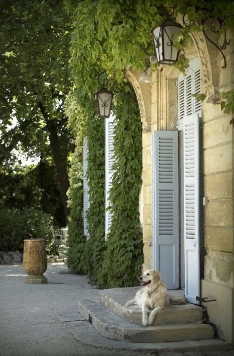 Tranquil #Frenchfarmhouse entry with dog lounging on stone steps at door with #blueshutters on Hello Lovely Studio #Provence