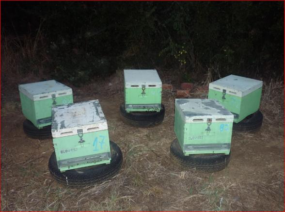 Τρόποι πολλαπλασιασμού των μελισσιών