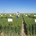 'Top Picks' offered as wheat producers gear up for new wheat crop