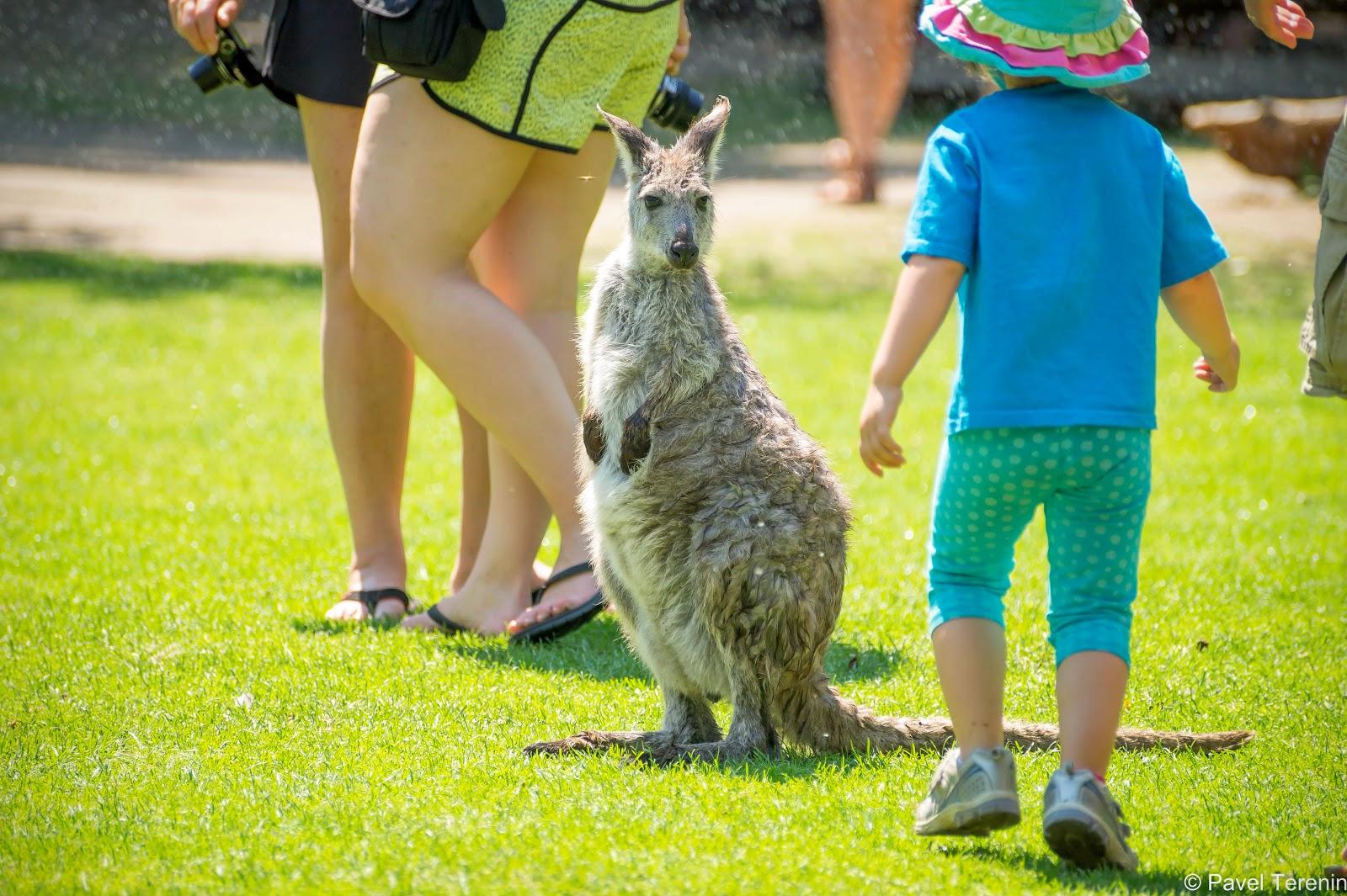 Больше всего радости и восторга животные вызывают у детей.