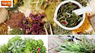 <img source='pic.gif' alt='Top 10 meilleures herbes pour votre cuisine.' />