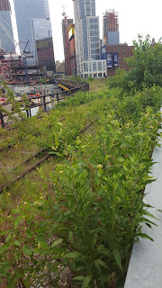parque high line en nueva york