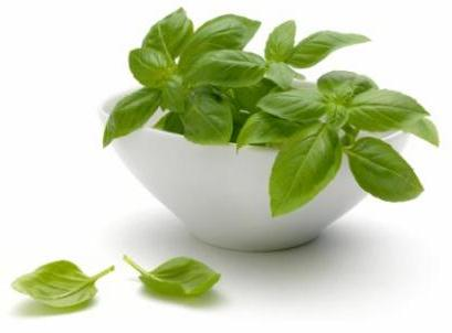 Basil Vitamin Health Benefits Contains Herb Recipes
