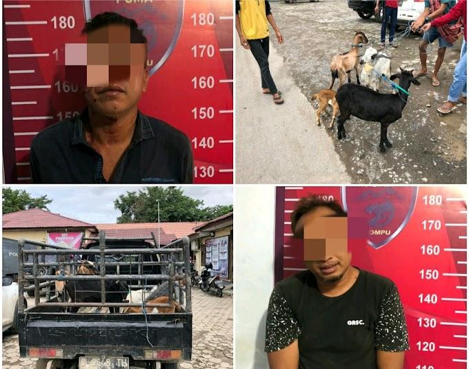 Nyaris Tegang Warnai Evakuasi dan Penangkapan Kedua Pria Ini Oleh Tim Puma Polres Dompu