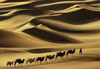 Binatang Yang Disebut Dalam Al qur'an