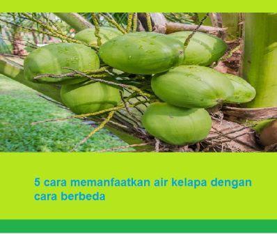5 cara memanfaatkan air kelapa dengan cara berbeda