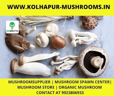 Mushroom Contract farming In wagholi, Pune