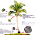Manfaat Sabut Kelapa Dari Pohon Kelapa
