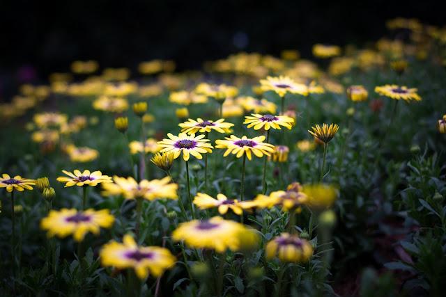 night flowers, flower in sunset