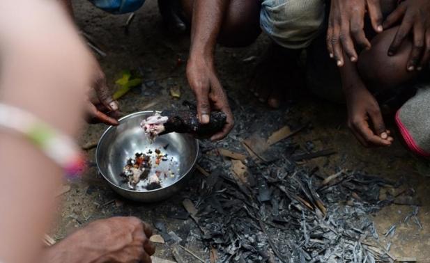 AGEN BOLA - Seorang Pria Di India Sehari Harinya Memakan Tikus