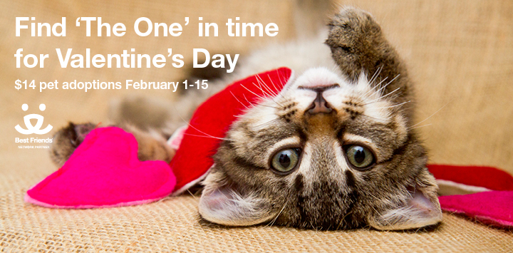 Valentine's Day Pet Adoption Special