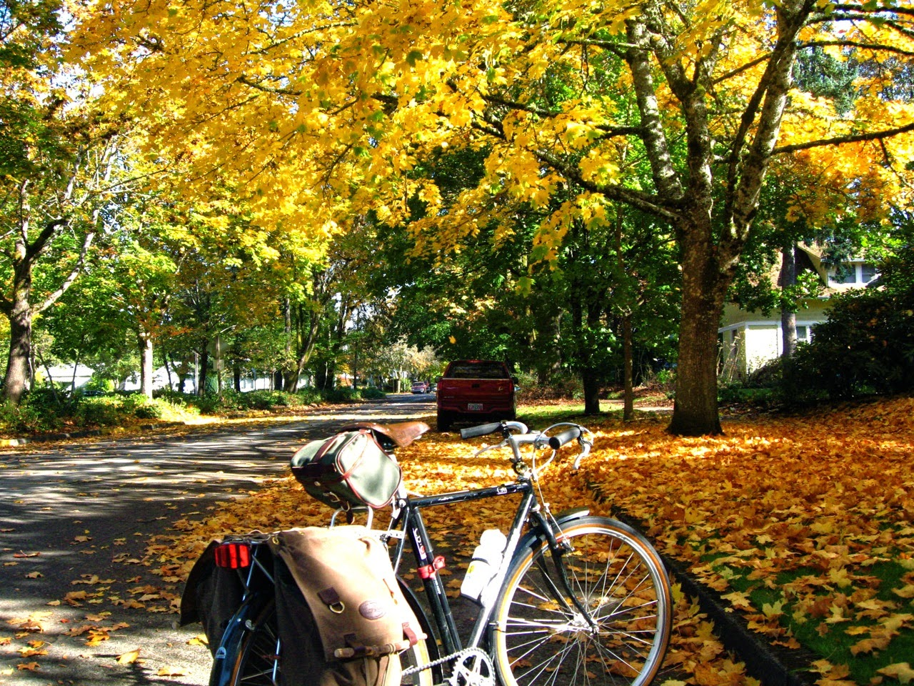 Bridgestone CB-Zip, fall color, Eugene Oregon, trees, gold, red, bicycle, autumn