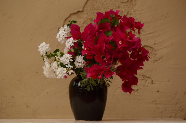 monday vase, small sunny garden, desert garden, bougainvillea, lantana, amy myers, photography