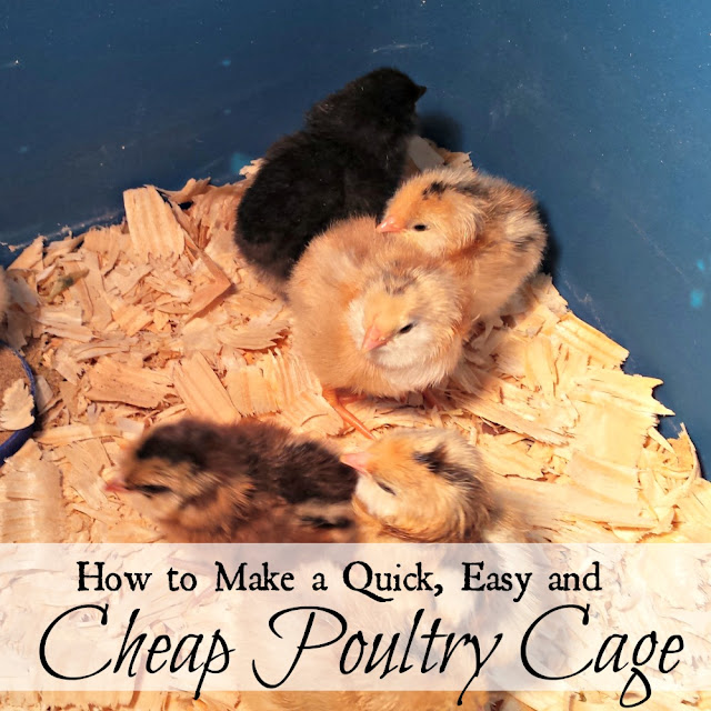 A quick, easy and cheap poultry cage