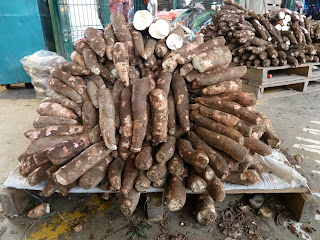 FRESH CASSAVA FOR SALE