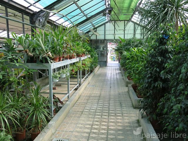 Visita al centro de jardiner a pradillo paisaje libre for Caracteristicas del vivero