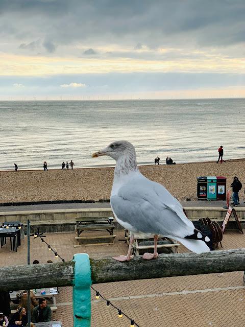 gull at Brighton beach