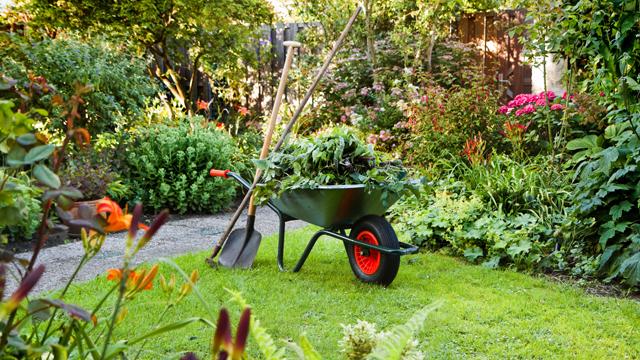 Top Garden Tips for Summer